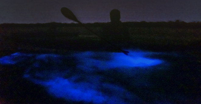 bioluminescence fun-things-to-do-in-orlando https://funthingstodoinorlando.com//